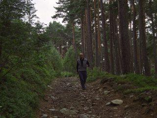 Já v lese